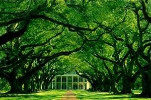 A narrow road sheltered by ancient oaks leads up to the doors of Threnody Manner